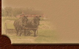Percheron Horses - Bar U Ranch